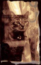 Kitten-at-window